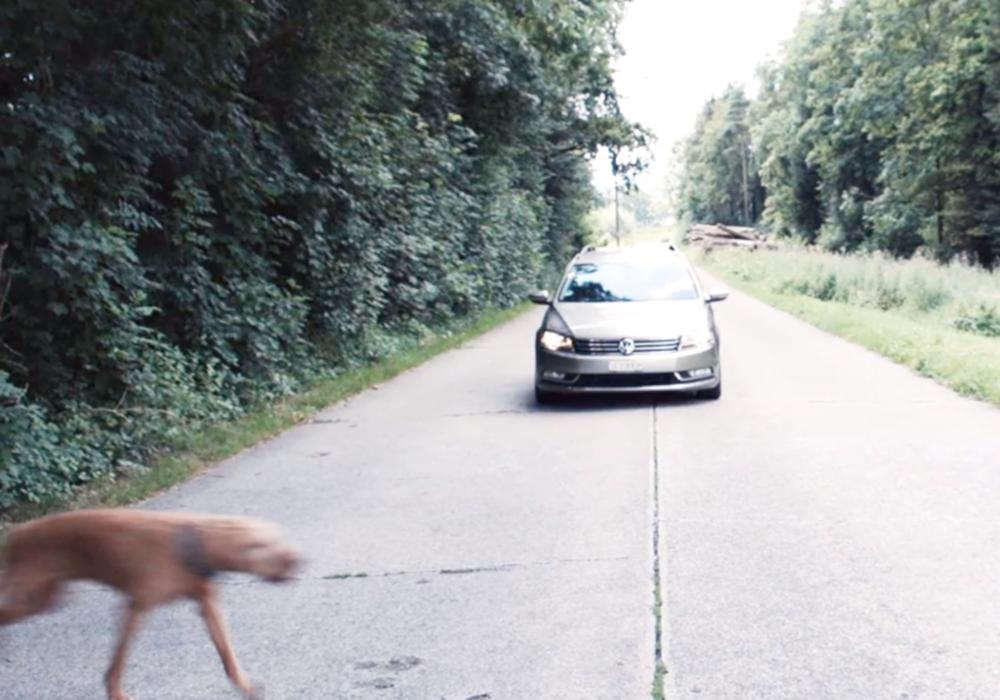 Artikelbild_Auto_fährt_auf_Hund_zu